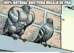 Enlace a El gimnasio de las palomas