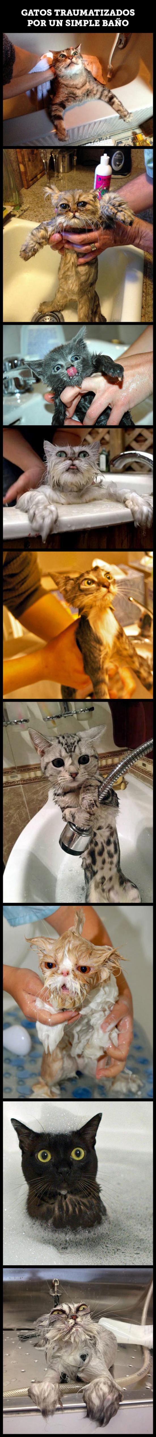Meme_otros - El mayor temor de un gato