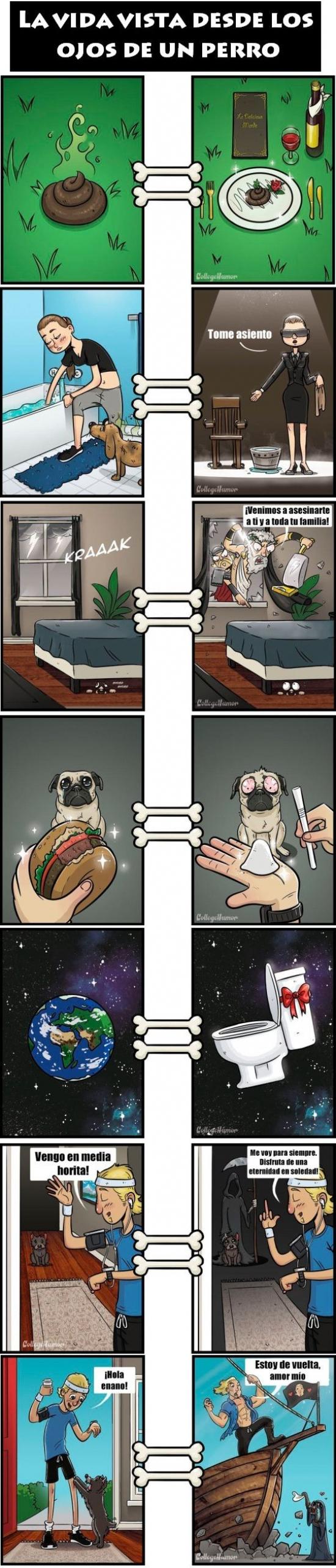 Otros - Cuida mucho a tu perro