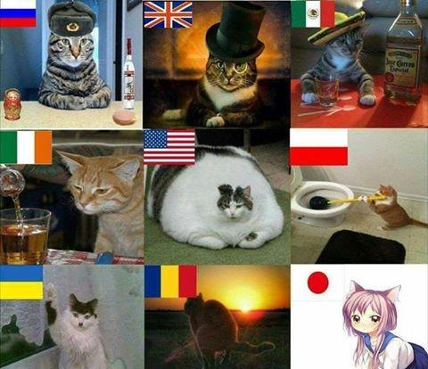 Meme_otros - Diferentes tipos de gatos por el mundo