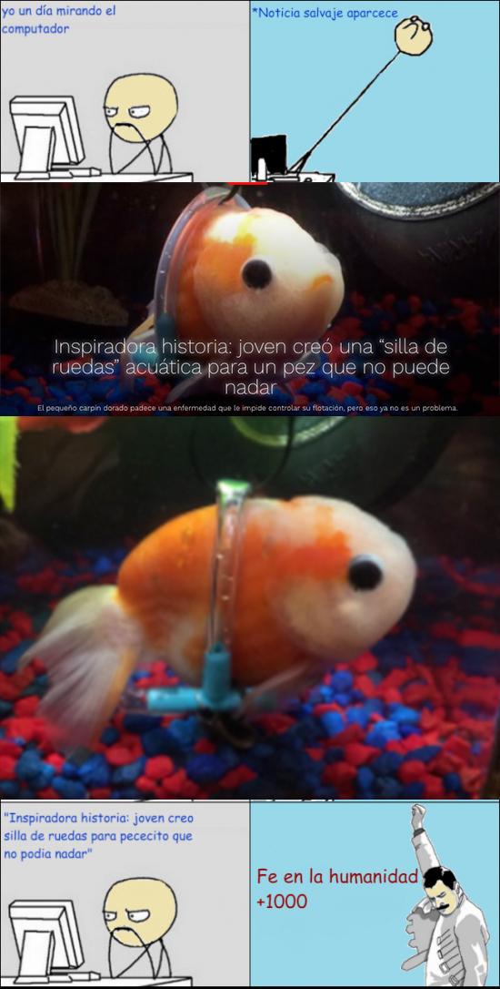 Freddie_mercury - Un poco de fe para la humanidad tras el gran gesto de un joven con su pez