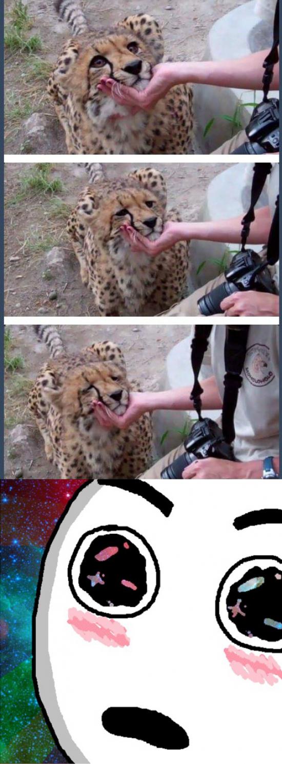 Otros - Alguien que te mire como un guepardo acariciado por primera vez