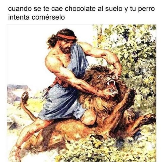 Meme_otros - Perros + chocolate = muerte