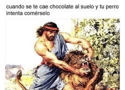 Enlace a Perros + chocolate = muerte