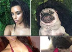 Enlace a Este perro se hace una sesión de fotos imitando a Kim Kardashian y el resultado es mejor que ella