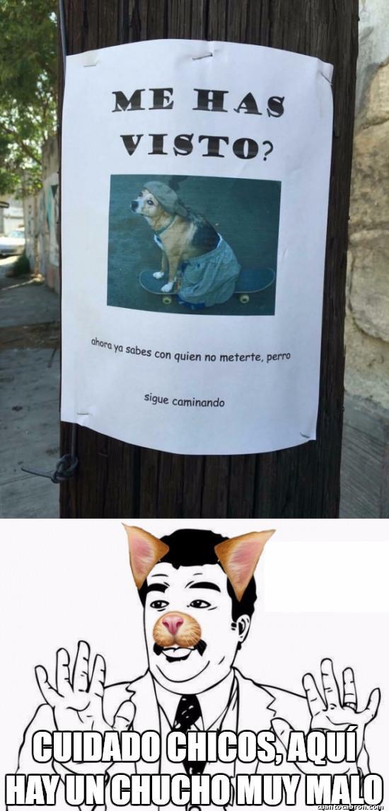 Meme_otros - Es el perro del Brayan