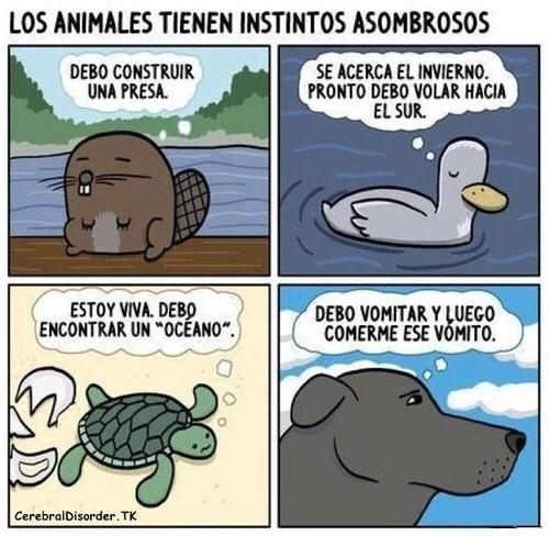 Otros - Los asombroso instintos de los animales