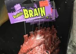 Enlace a Un cerebro muy realista...