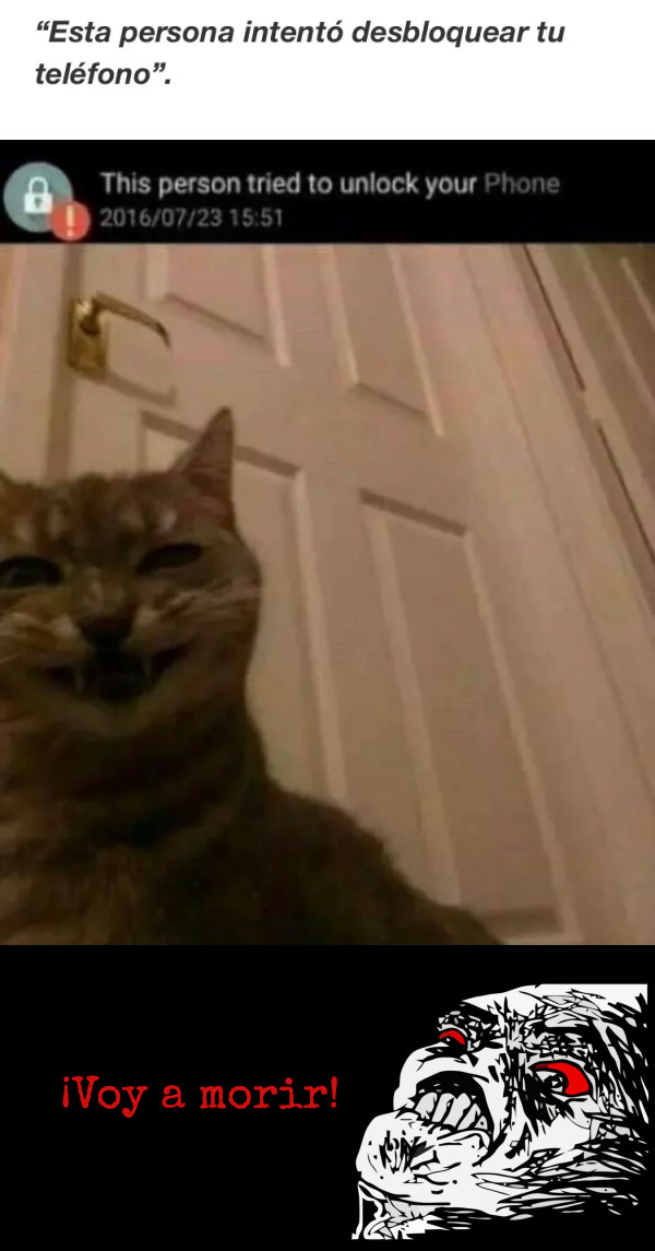 Inglip - Cuando se confirman todas las teorías sobre gatos conspiradores