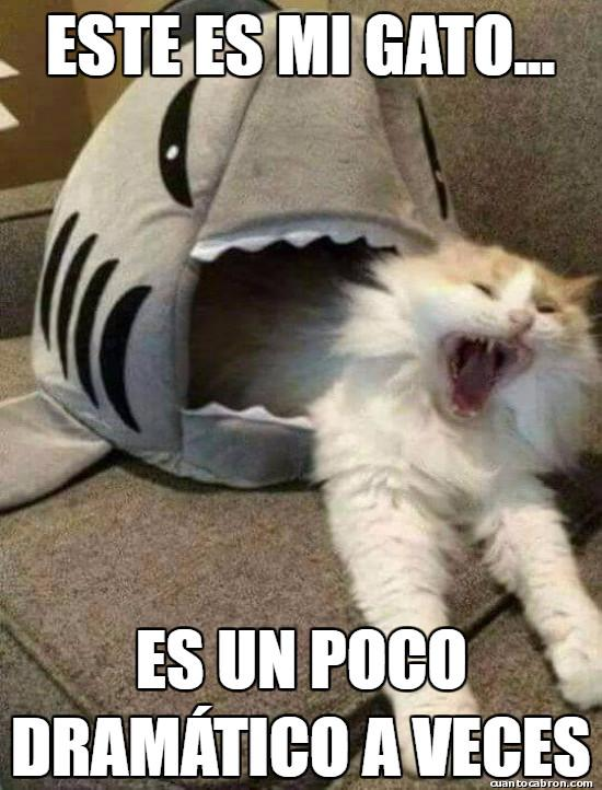Meme_otros - Una mascota peculiar