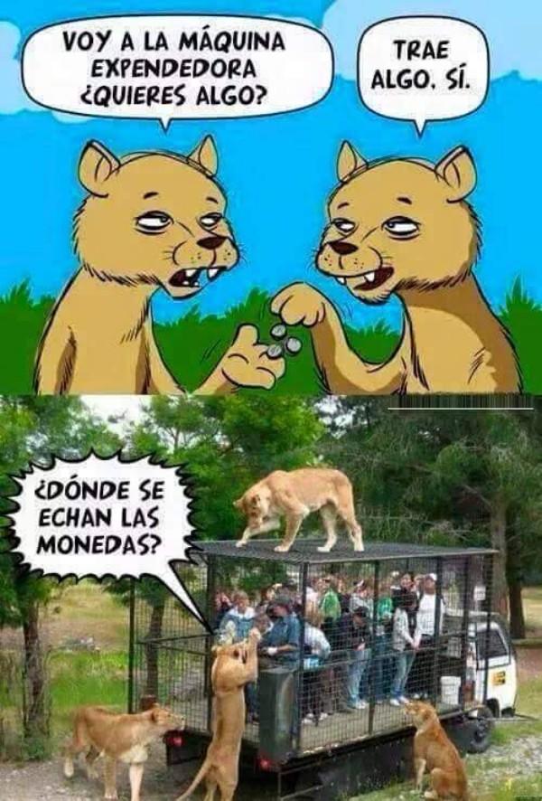 Otros - Si los leones fueran como los humanos