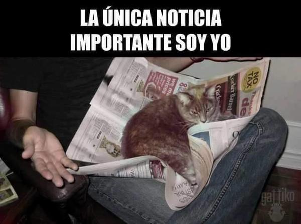 Meme_otros - Típico de los gatos
