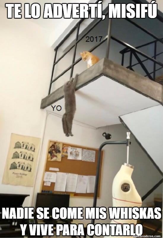 Otros - Te metiste con el gato equivocado