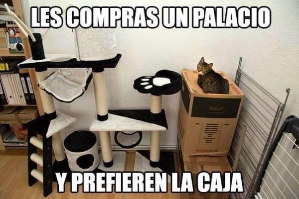 Meme_otros - La lógica de los gatos