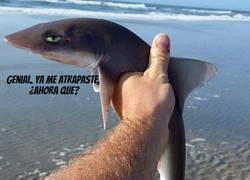 Enlace a Mini Tiburón malvado