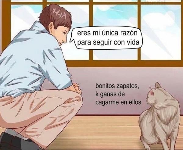Meme_otros - Los gatos tienen sus prioridades