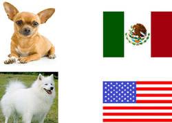 Enlace a Los perros en diferentes países