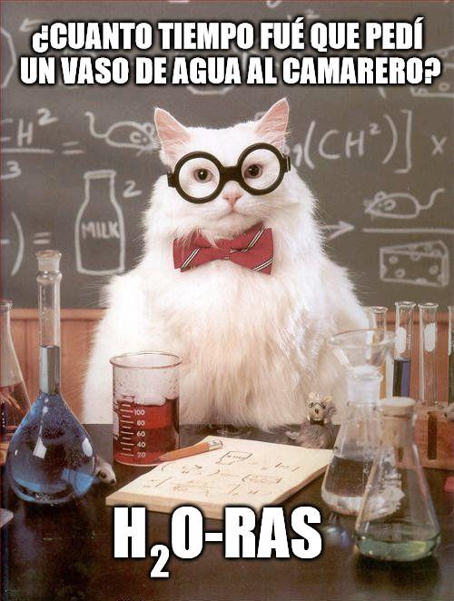 Gato_quimico - Camarero ¿dónde está mi vaso con agua?