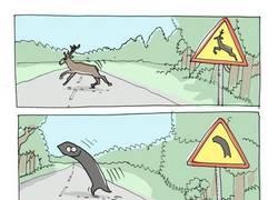 Enlace a ¡Cuidado, curva salvaje!
