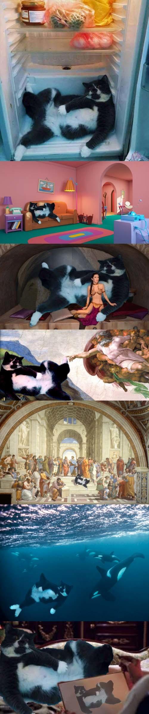Meme_otros - Pillan a este gato a la fresca en la nevera y llena internet de montajes