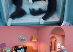 Enlace a Pillan a este gato a la fresca en la nevera y llena internet de montajes