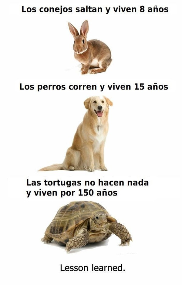 años,conejo,perros,tortuga,vida