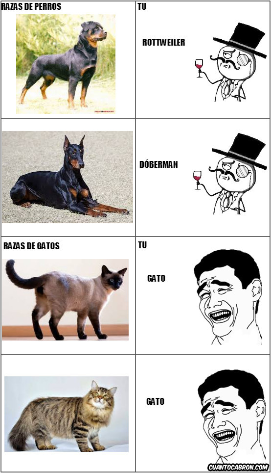 Yao - Razas de gatos y perros