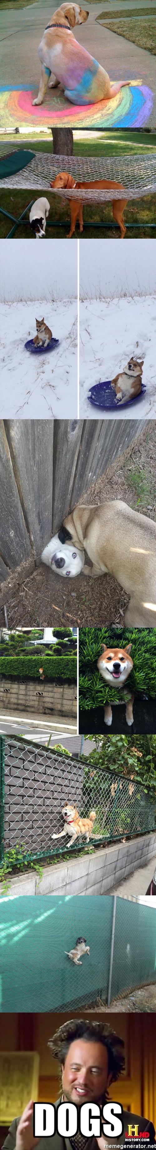 Meme_otros - Los perros y sus locuras