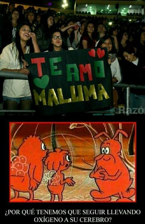 Meme_otros - Esos fans de Maluma...
