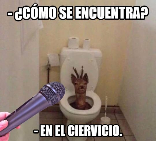 Meme_otros - Donde está el ciervo del meme