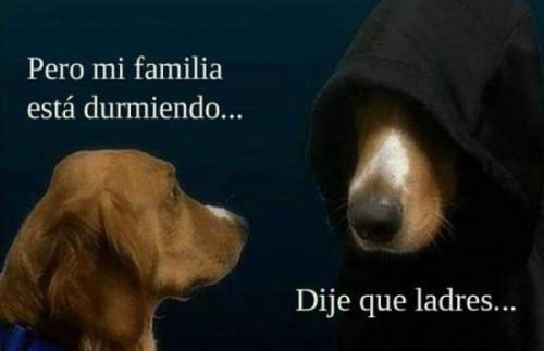 Meme_otros - Típico de perros