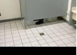 Enlace a El máximo troll de los baños
