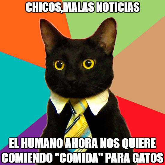 Gato_empresario - Basura para gatos