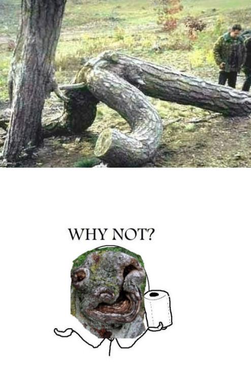 Why_not - El amor en el bosque