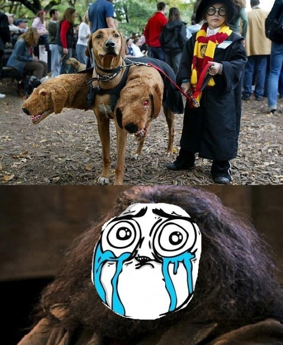 animal,cabezas,harry,perros,potter