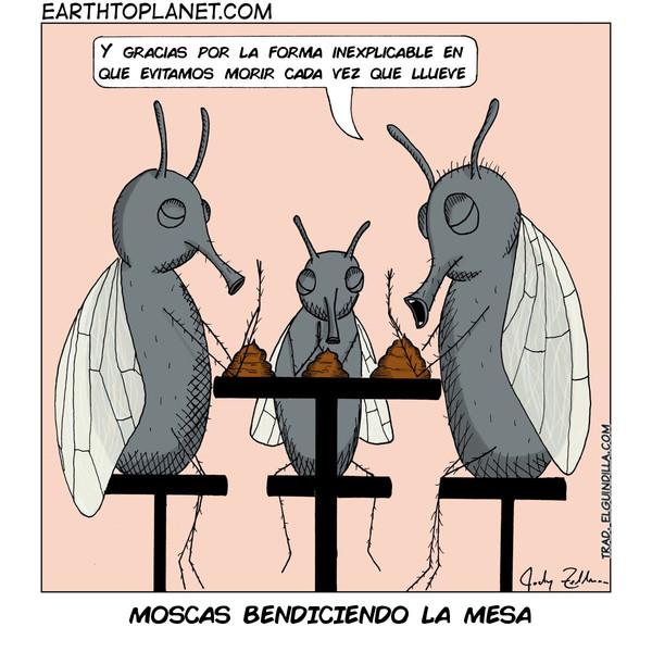 Otros - Nunca había pensado esto de las moscas