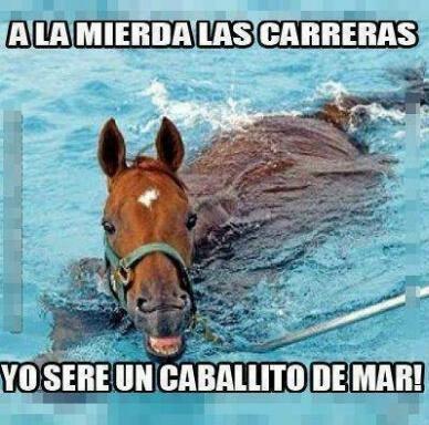 A_nadie_le_importa - Caballo de Mar