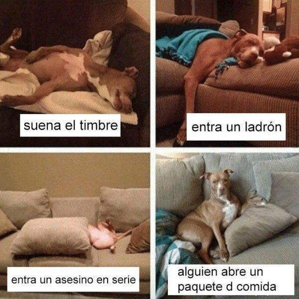 Meme_otros - Un perro sabe lo que es importante