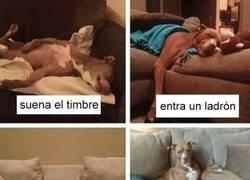 Enlace a Un perro sabe lo que es importante