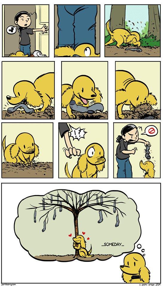 Otros - Esta es la verdadera intención de los perros al esconder calcetines