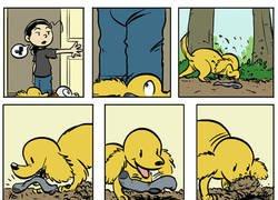 Enlace a Esta es la verdadera intención de los perros al esconder calcetines