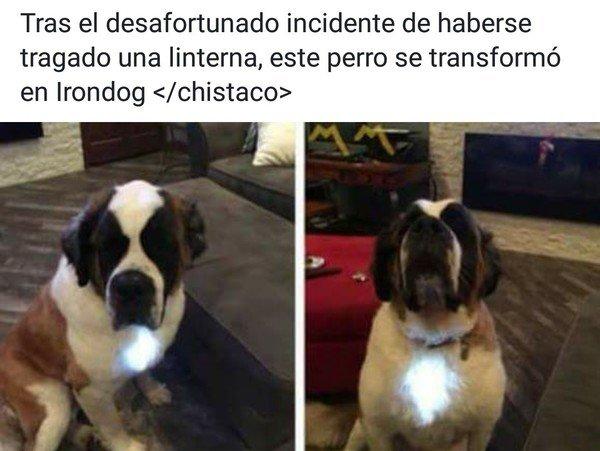 Meme_otros - El perro superhéroe