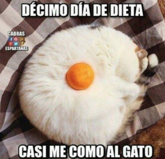Meme_otros - Dieta terrible dieta