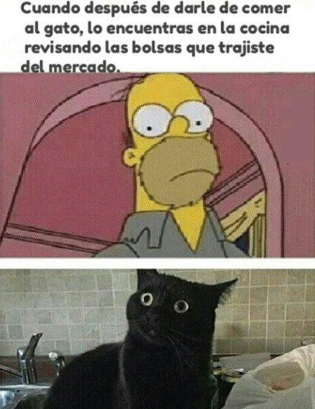 Meme_otros - El hambre infinita de los gatos