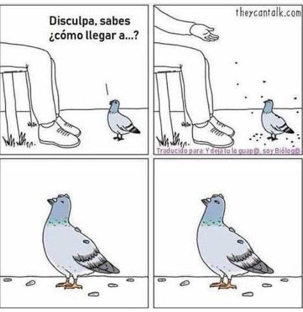 Otros - Es malo preguntarle a una paloma