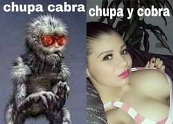 Enlace a Chupacabra