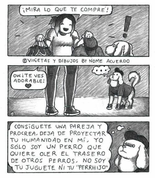 Otros - Los perros están cansados del postureo de sus dueños