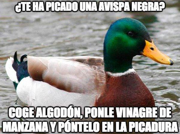Pato_consejero - Funciona de verdad