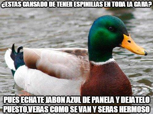 Pato_consejero - Un buen consejo que yo hago por feo...