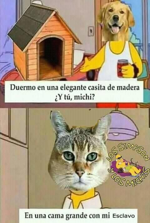 Cereal_guy - La vida de los gatos